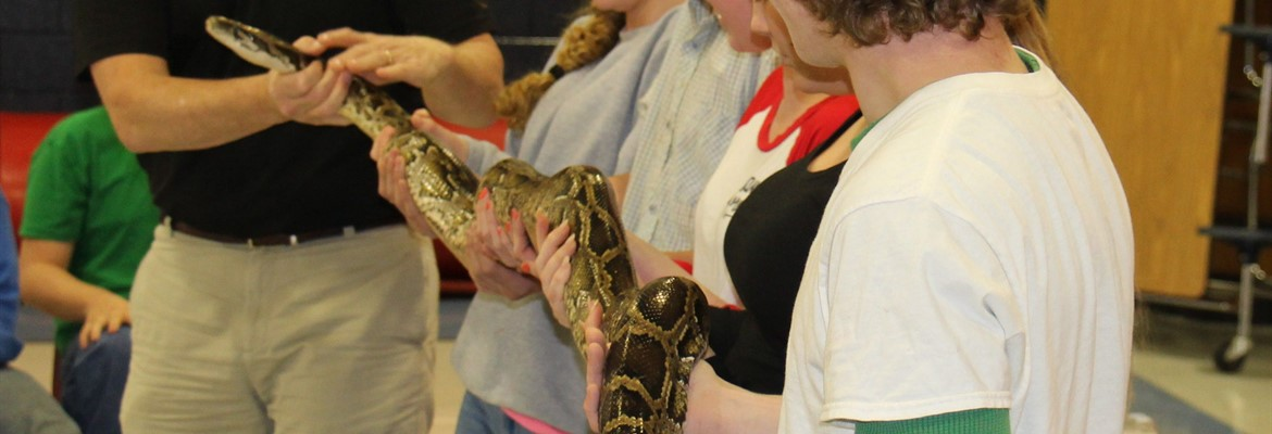 More animals from the wildlife and reptile presentation.